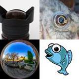 9 Buchstaben Lösung Fischauge