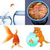 9 Buchstaben Lösung Goldfisch